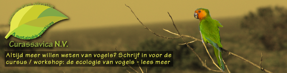 workshop-vogels-ok